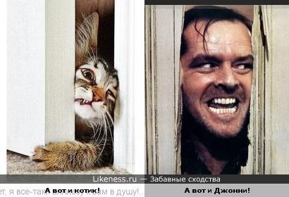 "Котик посмотрел ""Сияние"""