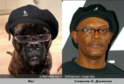Пёс похож на Сэмюэля Л. Джексона