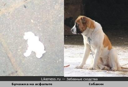Бумажка на асфальте напомнила собакина :-)