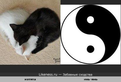 Котята похожи на инь-ян
