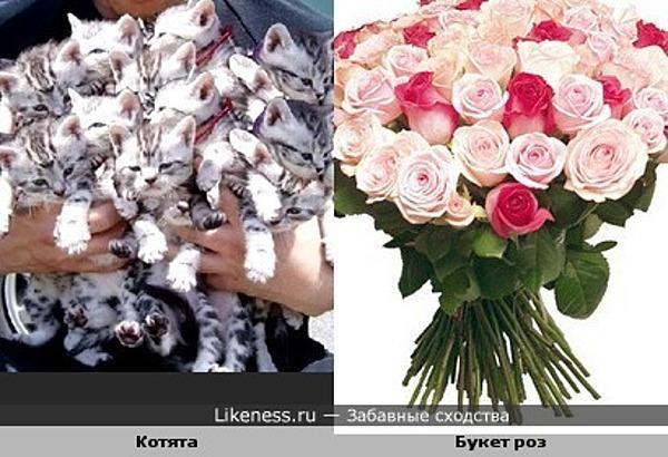 Букет котят похож на букет роз