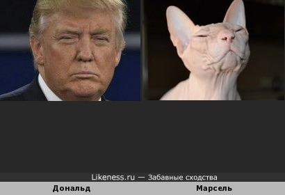 Сфинкс Марсель похож на Трампа