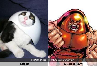 Кошак похож на Джаггернаута )