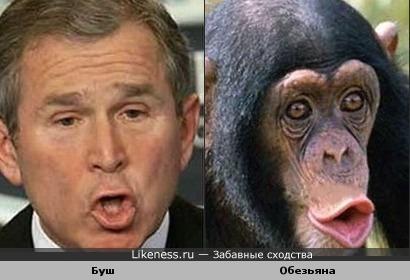 Буш похож на обезьяну