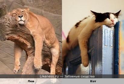 Спокой ночи, я тоже спать)