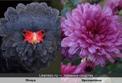 Поющий цветочек)