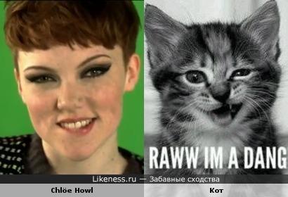 Chlöe Howl похожа на кота