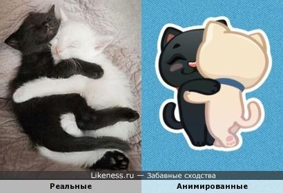 Коты: реальные и анимированные