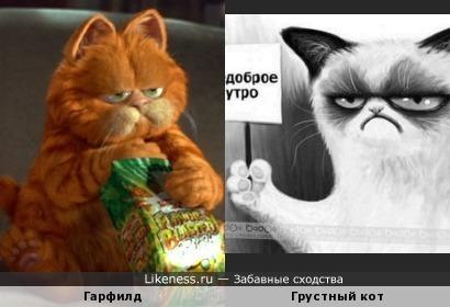 Коты ...