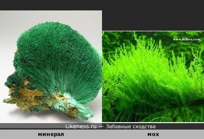 минерал и мох