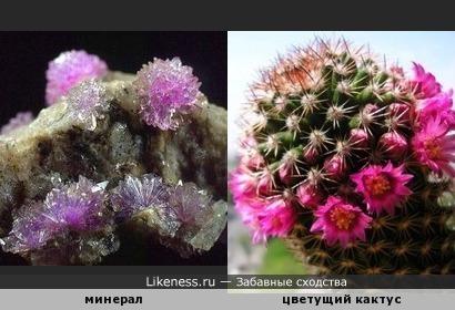 минерал и кактус