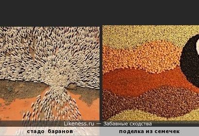 стадо баранов похоже на семечки