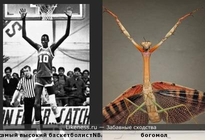 самый высокий баскетболист NBA за всю историю,напомнил богомола