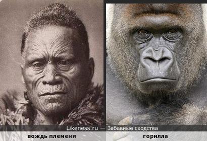 Дарвин не ошибался