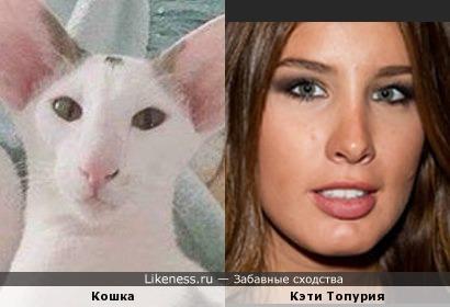 Кошка напомнила Кэти