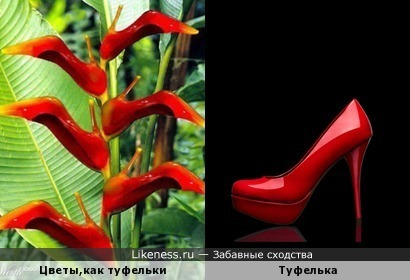 Чей туфля??