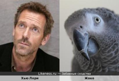 Хью Лори напоминает попугая жако