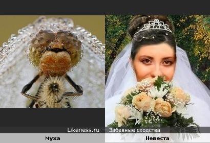 Муха похожа на невесту.