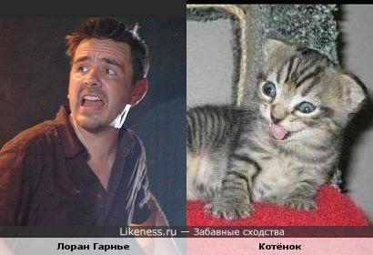 Французкий ди-джей Лоран Гарнье похож на котёнка