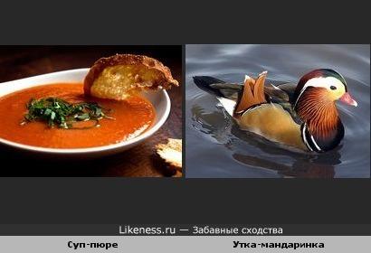 Суп-пюре похож на утку-мандаринку