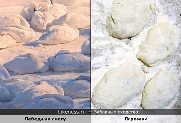 Лебеди на снегу похожи на пирожки