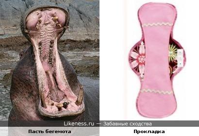 Пасть бегемота похожа на многоразовую гигиеническую прокладку