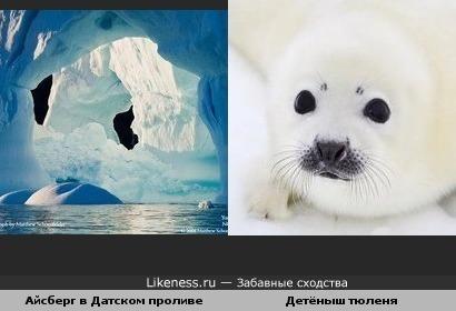 Айсберг в Датском проливе похож на мордочку детёныша тюленя