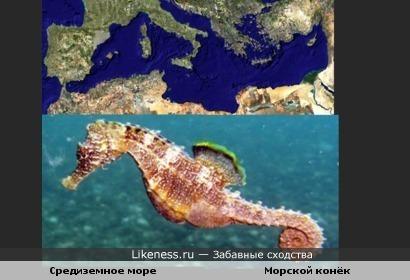 Средиземное море похоже на морского конька