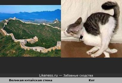 Участок Великой китайской стены похож на бегущего кота