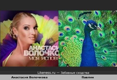 Анастасия Волочкова похожа на павлина