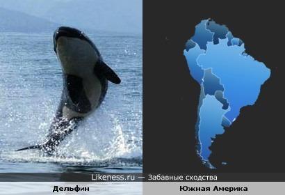 Этот дельфин очертаниями напомнил мне Южную Америку