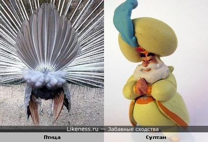 Хвост неизвестного природе создание похоже на султана в тюрбане