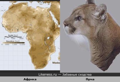 Очертания Африки похожи на профиль пумы