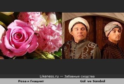 Лингвистический пост: Роза и Гиацинт