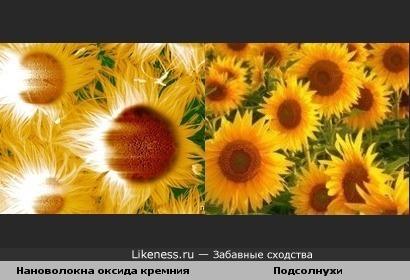 Нановолокна оксида кремния похожи на подсолнухи