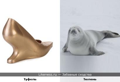 Дизайнерский туфель похож на тюленя