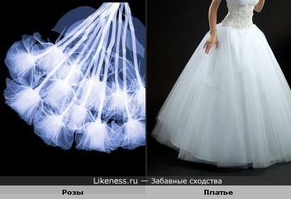 Рентгеновский снимок букуета роз похож на юбку свадебного платья