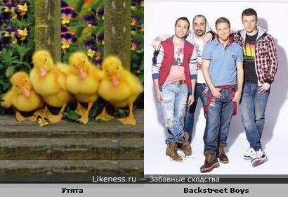 Эти утята напомнили участников квартета Backstreet Boys
