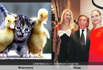 Кошки так похожи на людей