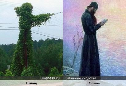 Фонарный столб, овитый плющом, похож на фигуру монаха