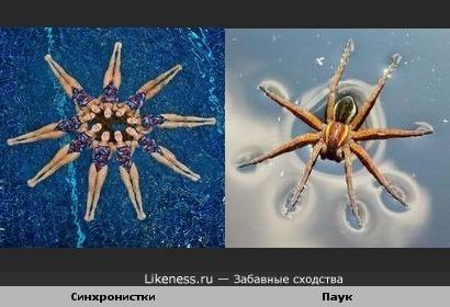 Фигура из синхронного плавания похожа на паука