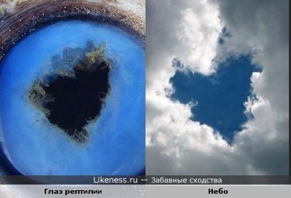 Глаз рептилии похож на небо в облаках