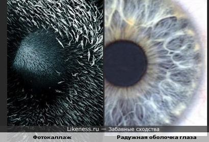 Фотокаллаж из людских тел похож на радужную оболочку глаза