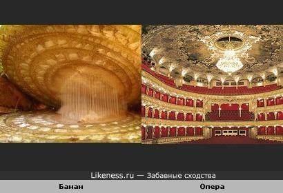 Банан в разрезе под микроскопом напоминает зал оперного театра