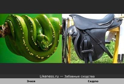 Змея похожа на седло