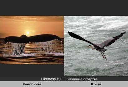 Хвост кита похож на взлетающую птицу