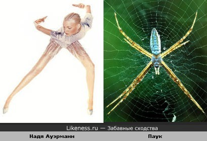 Надя Ауэрманн похожа на паука