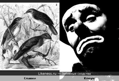 Птицы похожи на лицо грустного клоуна