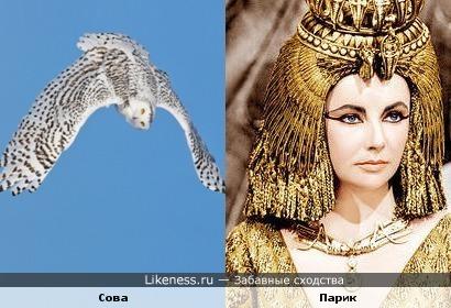 Сова в полёте похожа на египетский парик
