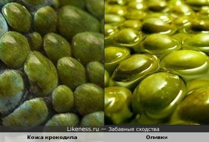 Кожа крокодила похожа на оливки в масле